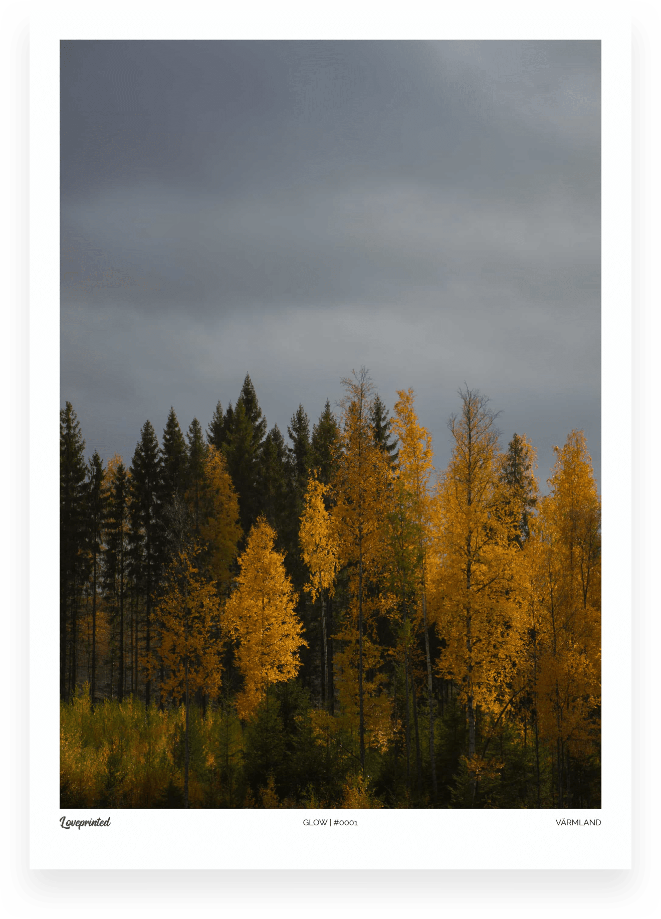 Glow | An Image of a golden Swedish tree line made by Loveprinted