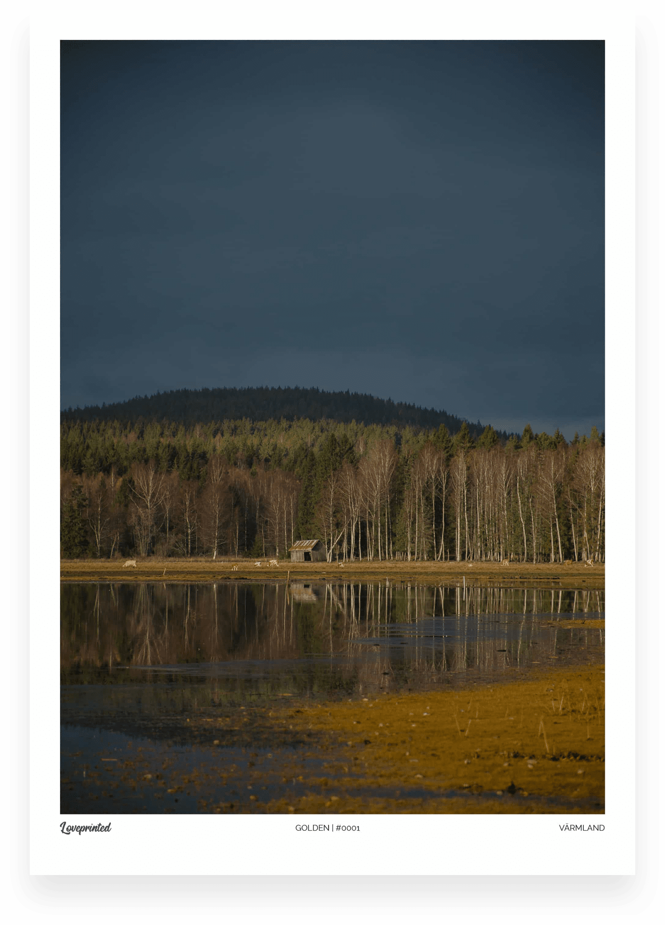 Golden | An Image of a Swedish lake and trees made by Loveprinted