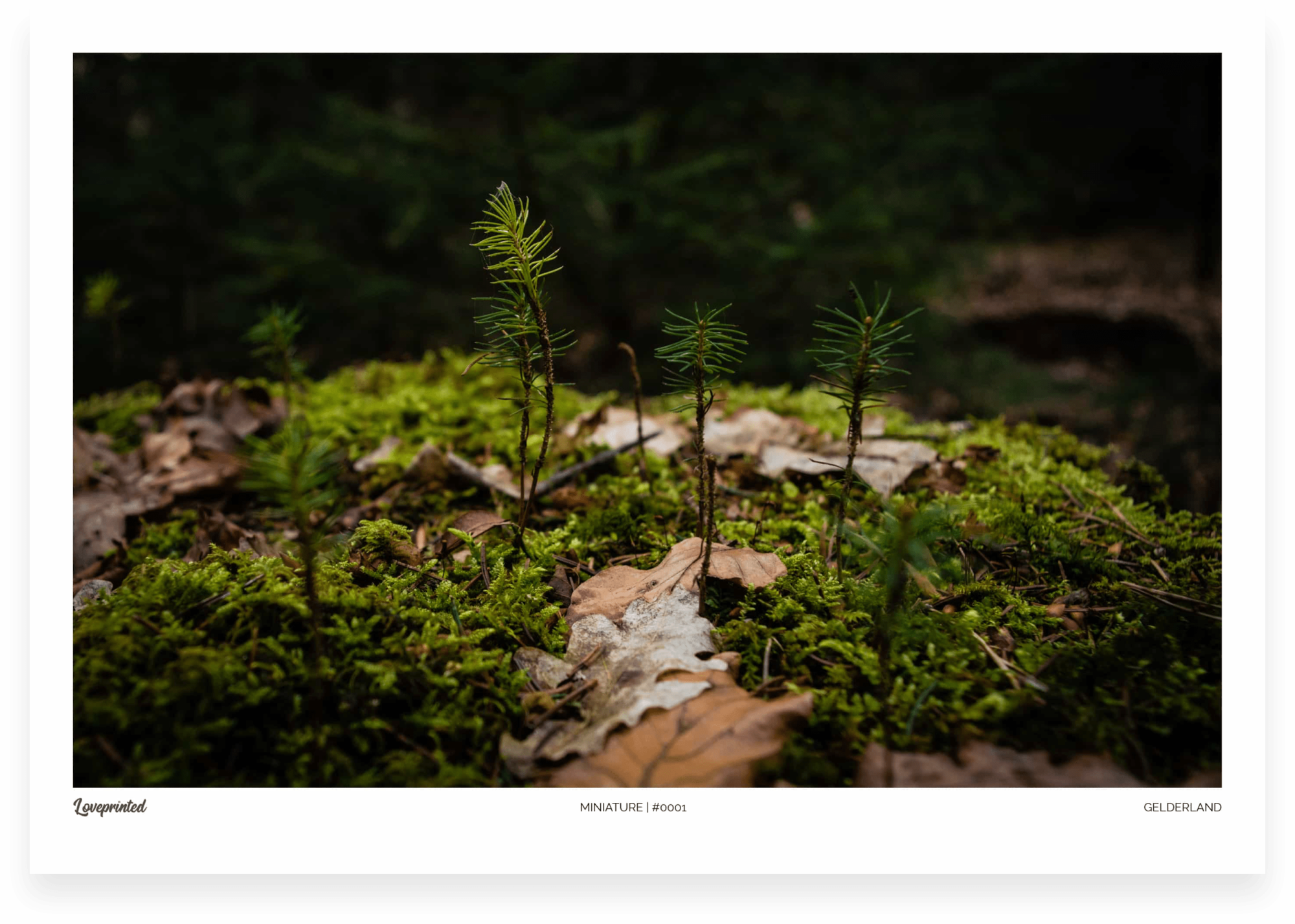 Miniature | A closeup image of a Dutch Forest made by Loveprinted