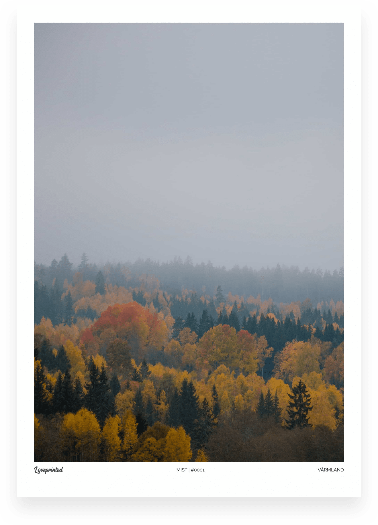 Mist | An Image of a Swedish Forest in the mist made by Loveprinted