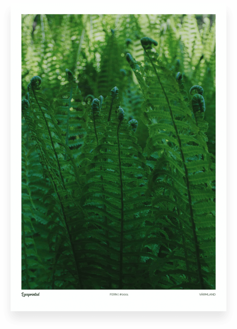 Fern | A closeup image of ferns in Sweden made by Loveprinted