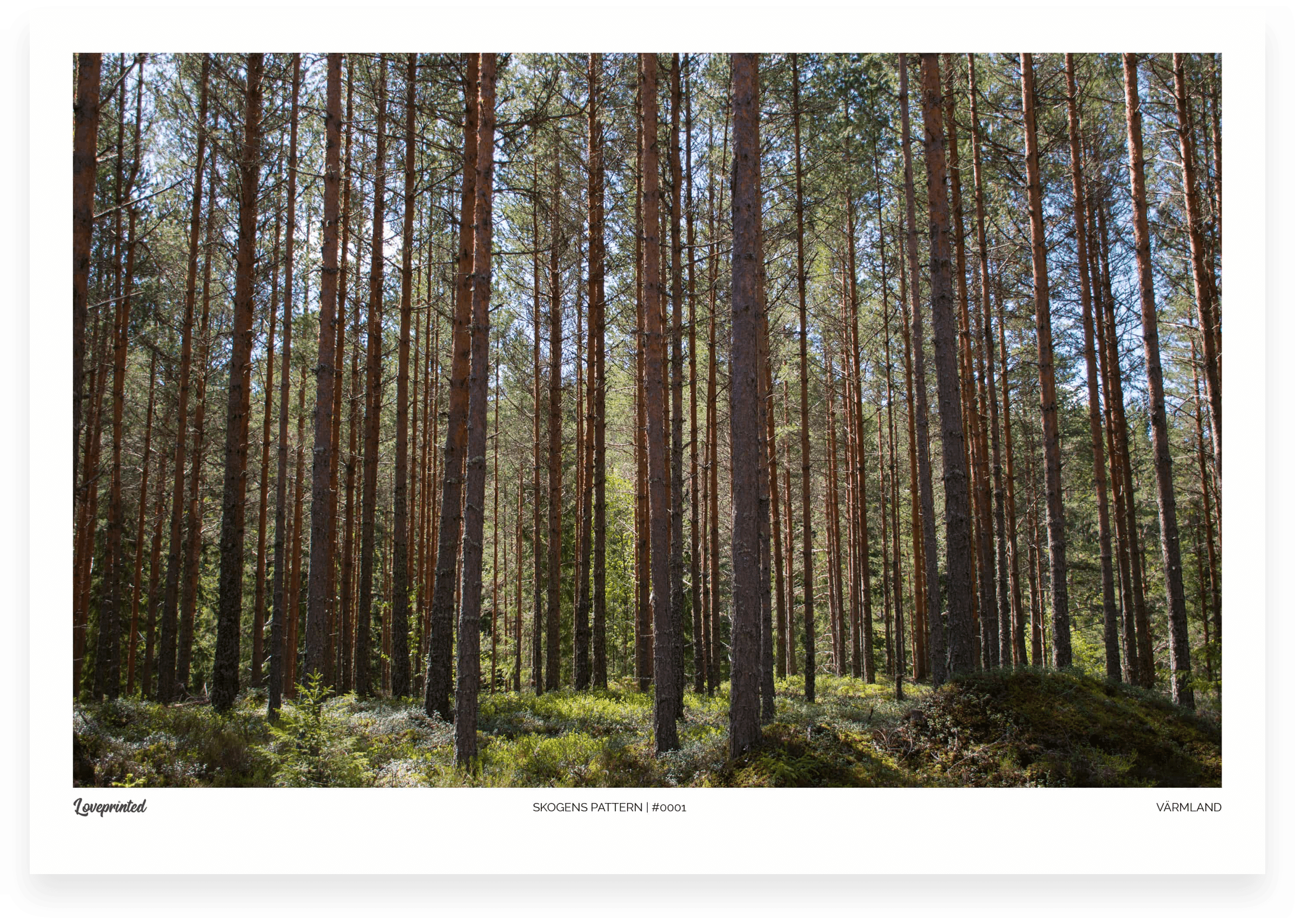 Skogens pattern | An Image of a Swedish Forest made by Loveprinted