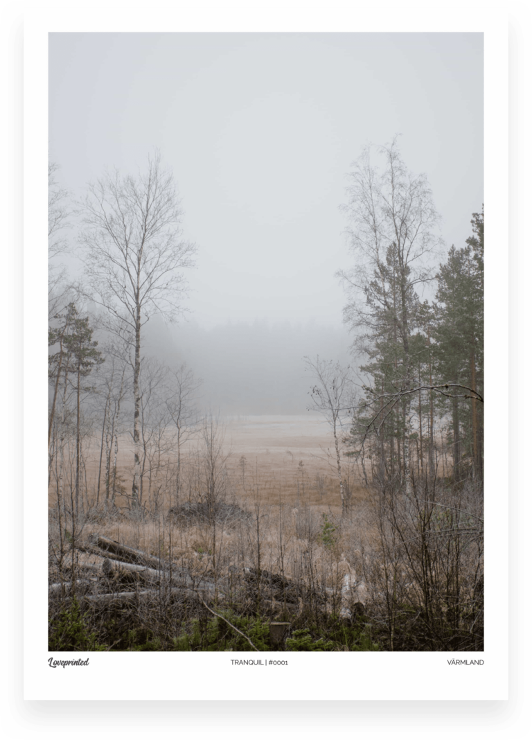 Tranquil | An Image of a Swedish Forest during winter with trees and mist made by Loveprinted