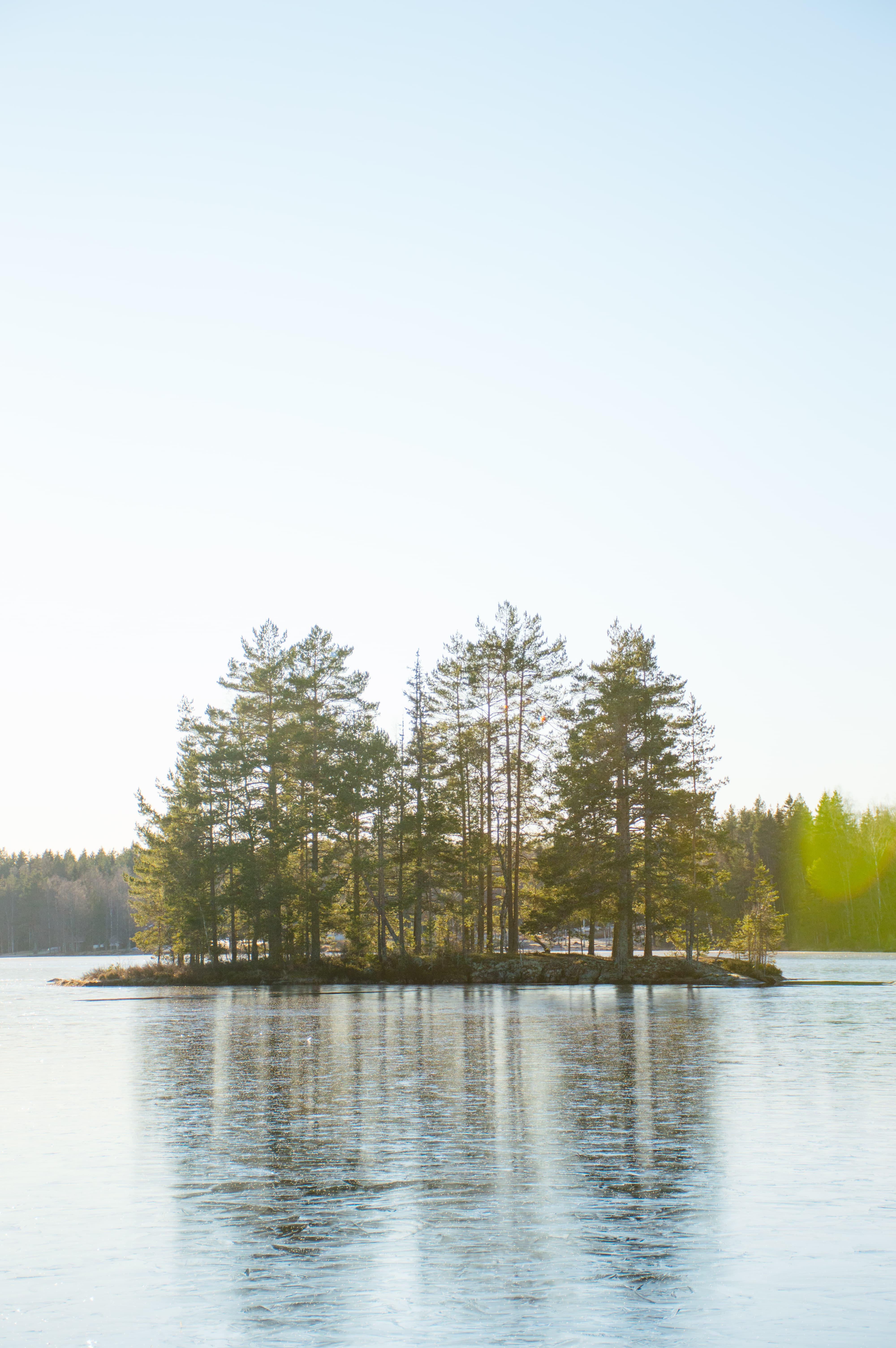 Little island of trees during winter